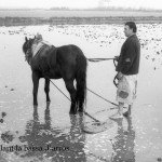 9-Entaulant la bassa d'arròs-5
